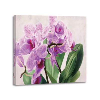 Sergio Jannace - Orchidee selvagge