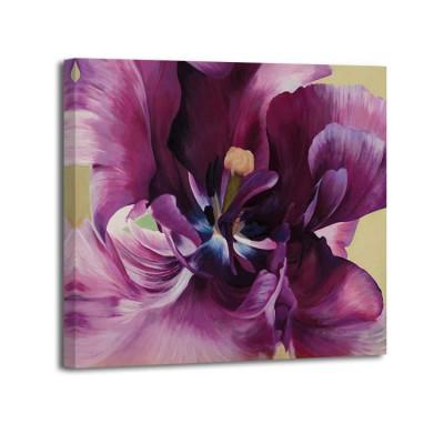 Luca Villa - Purple tulip close